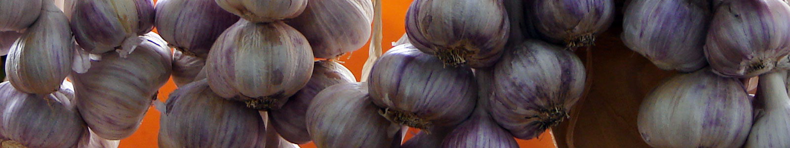 27th Annual Hills Garlic Festival
