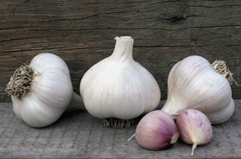 Rocky Ridge Farm Garlic